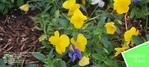 My-Flowers-Envelpoe